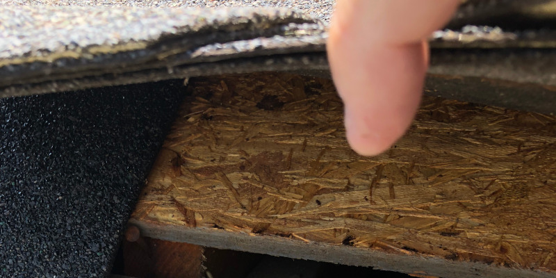 Rodent Prevention in Charlotte, North Carolina