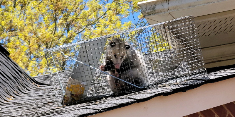 Rodent Removal in Charlotte, North Carolina