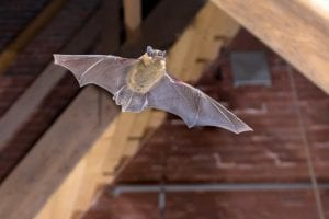 Attic Remediation: The Next Step After Animal Removal