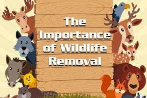 The Importance of Wildlife Removal [infographic]